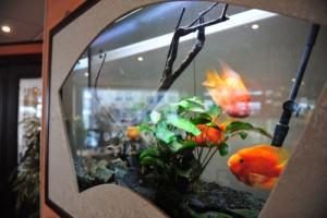 aquarium-500-3